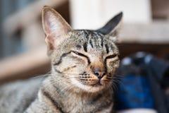 Het portret van kat slaapt Stock Foto's