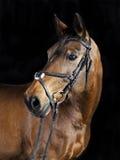 Het Portret van Oldenburg Royalty-vrije Stock Fotografie