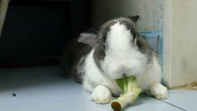 Het portret van oud konijn eet groene Groente terwijl rust 4k lengte stock footage