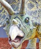 Het portret van Triceratops Stock Foto