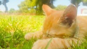 Het portretslaap van de babykat bij een park stock videobeelden