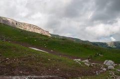 Het prachtige berglandschap van het Natuurreservaat van de Kaukasus stock foto's