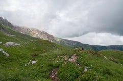 Het prachtige berglandschap van het Natuurreservaat van de Kaukasus stock afbeeldingen