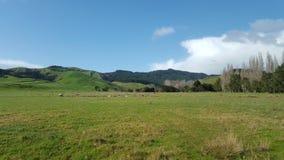Het prachtige landschap van Nieuw Zeeland, kawakawabaai Stock Afbeeldingen