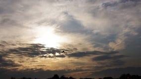 Het privé jet landen stock video