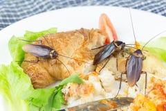 Het probleem in het huis wegens kakkerlakken die in de keuken leven stock foto