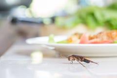 Het probleem in het huis wegens kakkerlakken die in de keuken leven stock fotografie