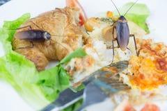 Het probleem in het huis wegens kakkerlakken die in de keuken leven stock foto's