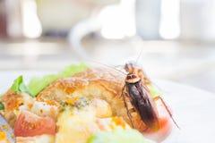 Het probleem in het huis wegens kakkerlakken die in de keuken leven royalty-vrije stock foto