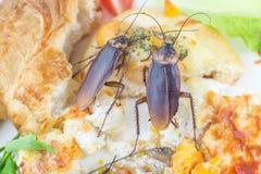 Het probleem in het huis wegens kakkerlakken die in de keuken leven royalty-vrije stock afbeeldingen