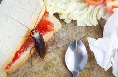 Het probleem in het huis wegens kakkerlakken die in de keuken leven Kakkerlak die geheel tarwebrood op het hakken houten backgrou royalty-vrije stock fotografie