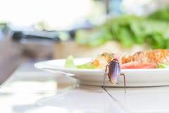 Het probleem in het huis wegens kakkerlakken die in ki leven royalty-vrije stock afbeelding