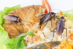 Het probleem in het huis wegens kakkerlakken die in ki leven stock fotografie