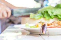 Het probleem in het huis wegens kakkerlakken die in ki leven royalty-vrije stock foto's