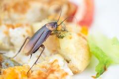 Het probleem in het huis wegens kakkerlakken die in ki leven royalty-vrije stock afbeeldingen