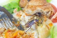 Het probleem in het huis wegens kakkerlakken die in ki leven royalty-vrije stock fotografie