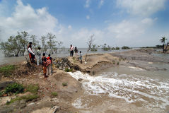 Het Probleem van de dijk in Sundarban Stock Fotografie