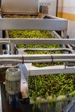 Het procédé van de olijfolieextractie in een molen van de olijfoliepers in Griekenland Royalty-vrije Stock Afbeelding