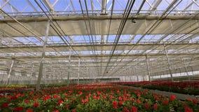 Het proces om het glasdak in een grote moderne serre te sluiten Het daksluiting van de tijdtijdspanne in de serre stock videobeelden