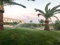 Het proces om water te geven, bevochtigen, die derevyer, installaties, tropische zuidelijke grote groene palmen met grote groene  royalty-vrije stock foto