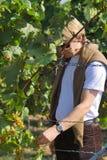 Het proeven van de druiven Royalty-vrije Stock Foto's