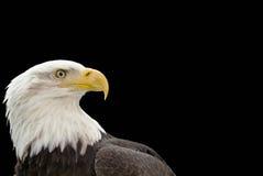 Het profiel van de adelaar op zwarte Stock Afbeeldingen
