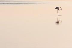 Het Profiel van de flamingo stock fotografie