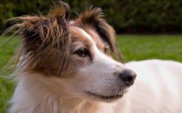 Het profiel van de hond Stock Foto's