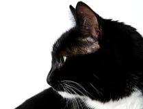 Het profiel van de kat Stock Afbeelding
