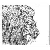 Het profiel van een leeuw die, bianci en zwarte brullen uit te rekken katachtig, de koningen van het bos stock illustratie