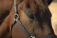 Het Profiel van het paard Royalty-vrije Stock Foto's