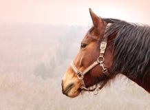 Het Profiel van het paardhoofd Stock Foto