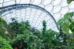 Het Project van Eden - binnen het Tropische Bioma Royalty-vrije Stock Fotografie