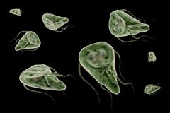Het protozoön van Giardialamblia dat giardiasis ziekte 3D teruggevende illustratie veroorzaakt Stock Foto