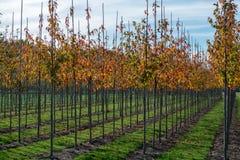 Het publiek en privat de tuin, parkenboomkwekerij in Nederland, specialiseren zich binnen in middel aan zeer grote bomen, grijze  royalty-vrije stock afbeeldingen