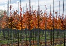 Het publiek en privat de tuin, parkenboomkwekerij in Nederland, specialiseren zich binnen in middel aan zeer grote bomen, grijze  stock afbeelding