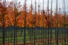 Het publiek en privat de tuin, parkenboomkwekerij in Nederland, specialiseren zich binnen in middel aan zeer grote bomen, grijze  royalty-vrije stock fotografie