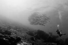 Het punt van de barracuda royalty-vrije stock afbeelding