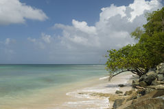 Het Punt van de duif, Tobago Stock Foto