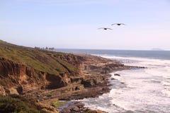 Het punt van de pelikaan Stock Foto