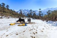 Het punt van de Phedangmening bij het Nationale Park van Kanchenjunga Royalty-vrije Stock Foto's
