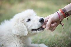 Het puppy bijt een hand Royalty-vrije Stock Foto