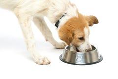 Het puppy drinkt water van een kom Royalty-vrije Stock Afbeelding