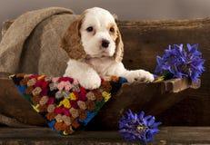 Het puppy en de bloem van de cocker-spaniël Stock Afbeelding