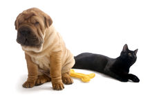 Het puppy en de Kat van Sharpei Stock Foto's