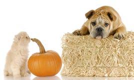 Het puppy en het katje van Halloween royalty-vrije stock afbeelding