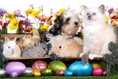 Het puppy, het katje, de konijntjes en de kuikens van Pasen Stock Fotografie