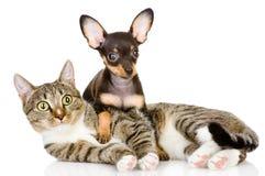Het puppy ligt op een gestreepte cat.looking bij camera. royalty-vrije stock afbeeldingen