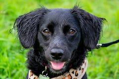 Het puppy luistert aan de eigenaar en oefent functies op het bevel uit Braaf en intelligente hond op een gang stock afbeelding