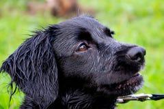 Het puppy luistert aan de eigenaar en oefent functies op het bevel uit Braaf en intelligente hond op een gang royalty-vrije stock fotografie